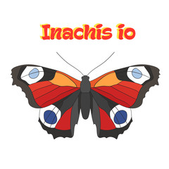 Butterfly inachis io vector illustration