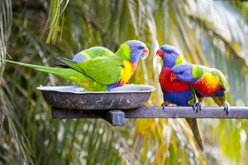 Parrots eating and talking