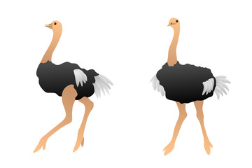 Birds ostrich isolated illustration vector