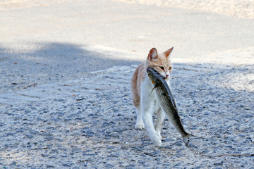 Stray cat with stolen fish in her mouth