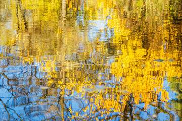 Reflection in water yellow foliage and blue sky