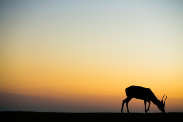 鹿と夕焼け