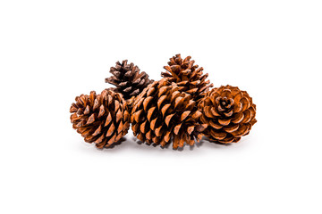 Group of 5 pine cones on white background
