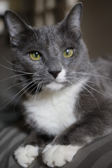 Animals: Cat - gray