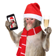 Funny monkey with christmas santa hat taking a selfie and smilin