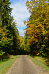 small road in autumn with trees on both sides