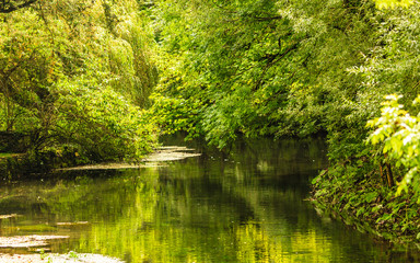 Foto op Aluminium Rivier Summer park with river trees on the shore
