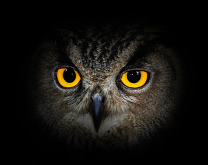 Wall Mural - Eyes eagle owl on black background