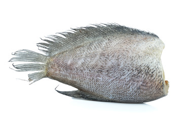 Single Snake Skin Gourami Fish, Pla Salit (Trichogaster pectoral