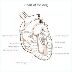 Heart of a dog vector illustration