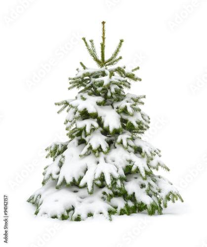 Tannenbaum Mit Schneefall.Verschneiter Tannenbaum Auf Reinweiß Stockfotos Und Lizenzfreie