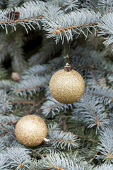 Christmas and New Year`s ball on the background spruce, close-up