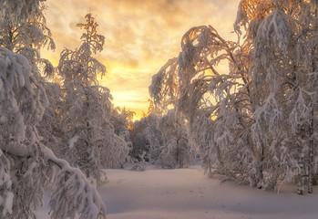Зимняя лесотундра