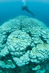 Diver Above Bleached Corals