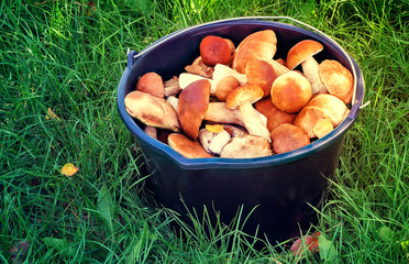 Mushrooms in a bucket in a forest glade.