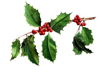 Watercolor christmas holly leaf
