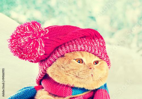 Кот под шапкой  № 3059251  скачать