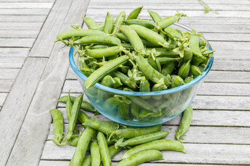 Freshly picked peas stiil in their  peapods in a bowl waiting to be shelled on a wooden table