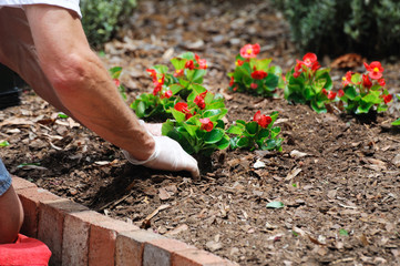 Fototapeta planting flower obraz