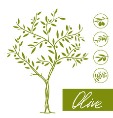 Set of olive tree icons. Vector element