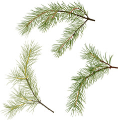 three pine tree green branches isolated illustration