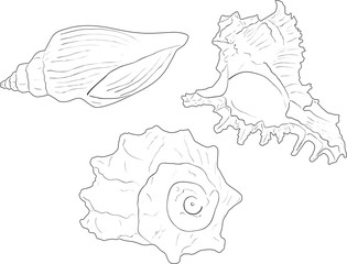 three shellfishes sketches isolated on white
