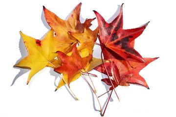 Risultati immagini per foglie autunnali