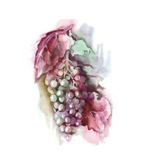 Watercolor Grape