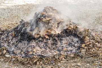burn dry leaves