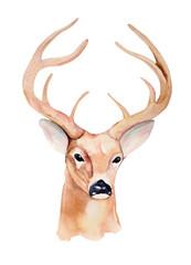 Watercolor deer head. Design for T-shirt. Handmade illustration.