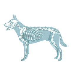 Dog skeleton veterinary vector illustration