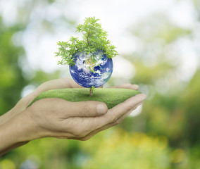 Planet and tree in human hands on green bokeh background, Save t
