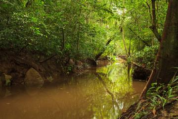 Small jungle river in borneo