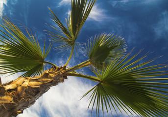 Palm tree leafs on blue sky