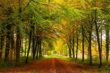 Autumn Avenue of Trees