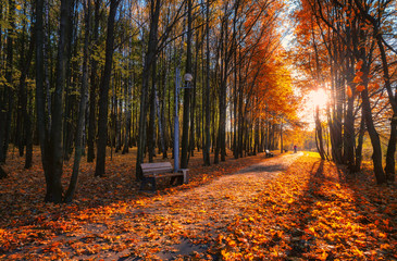 Beautiful autumn alley in a park with colorful trees and sunlight