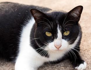cat looking something