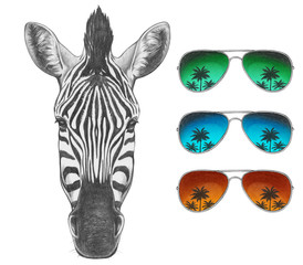 Portrait of Zebra with mirror sunglasses. Hand drawn illustration.