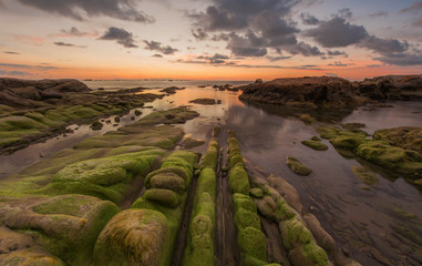 green moss on the rock by the sea