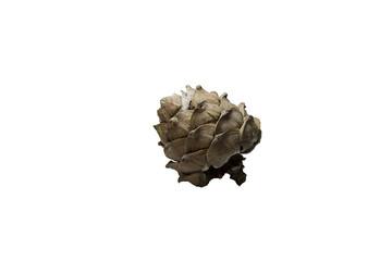 cedar cone on a white background ; кедровая шишка на белом фоне