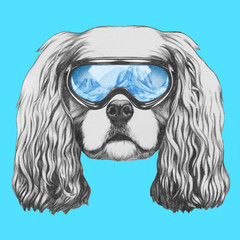 Portrait of Cavalier King Charles Spaniel with ski goggles. Hand drawn illustration.
