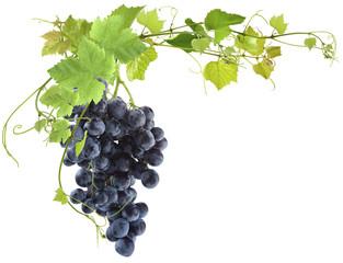 vigne et grappe de raisin muscat sur fond blanc