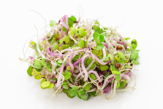 tender alfalfa sprouts on white base