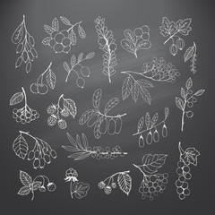 Set of garden and wild hand-drawn chalk berries