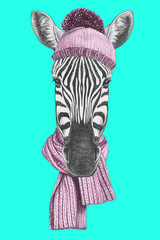 Portrait of Zebra with hat and scarf. Hand drawn illustration.