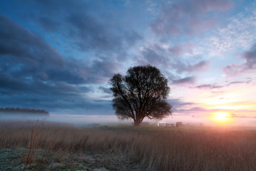 beautiful foggy sunrise in countryside
