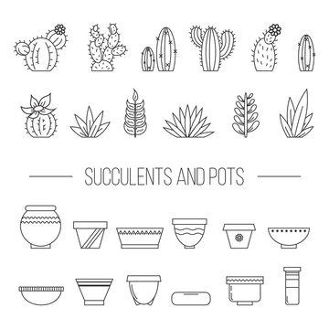 Set of succulent plants, cactuses and pots..Linear botanical vector elements