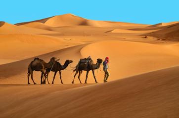 Fotorolgordijn Kameel Caravan in desert