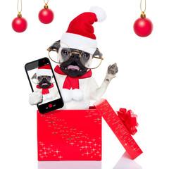 christmas surprise selfie dog
