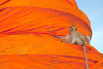 Monkeys play climbing a great orange cheesecloth.